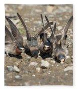 Cliff Swallows Gather Mud Fleece Blanket