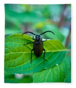 Climbing Beetle Fleece Blanket