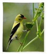 Clinging Goldfinch Fleece Blanket