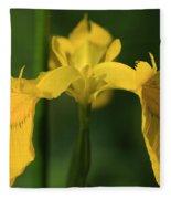 Close Up Of A Yellow Bearded Iris Fleece Blanket