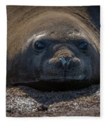 Close-up Of Elephant Seal Looking At Camera Fleece Blanket