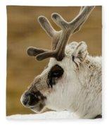 Close-up Of Reindeer Head On Snowy Ridge Fleece Blanket