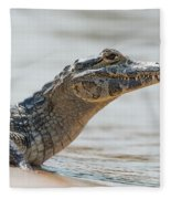 Close-up Of Yacare Caiman On Sandy Beach Fleece Blanket