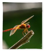 Close Up Red Dragonfly Fleece Blanket
