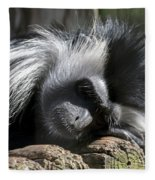 Closeup Of Black And White Angolian Primate Sleeping On Log Raft Fleece Blanket