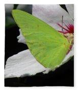 Cloudless Giant Sulphur Butterfly  Fleece Blanket