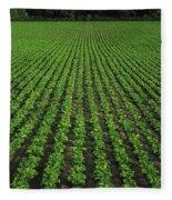 Co Tipperary, Ireland Sugar Beet Fleece Blanket