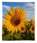 Colby Farms Sunflower Field Newbury Ma Sunrise Fleece Blanket