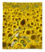 Colby Farms Sunflower Field Newbury Ma Fleece Blanket
