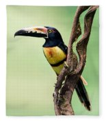 Collared Aracari Pteroglossus Fleece Blanket