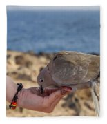 Collared Dove Feeding From A Hand Fleece Blanket