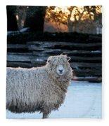 Colonial Sheep In Winter Fleece Blanket