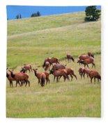 Colorado Elk Herd Fleece Blanket