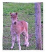 Colt Pony Fleece Blanket