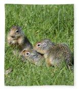Columbian Ground Squirrels Fleece Blanket