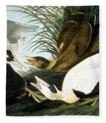 Common Eider, Eider Duck Fleece Blanket