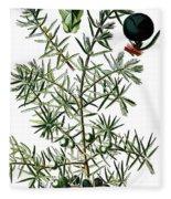 common juniper, Juniperus communis Fleece Blanket
