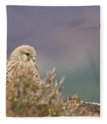 Common Kestrel Falco Tinnuculus Perched On Rock Fleece Blanket