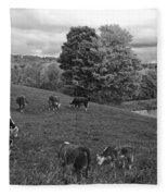 Congregating Cows. Jenne Farm Cow Reading Vermont Black And White Fleece Blanket