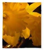 Contemporary Flower Artwork 10 Daffodil Flowers Evening Glow Fleece Blanket