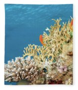 Coral Reef Eco System Fleece Blanket