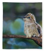 Costa's Hummingbird - Square Fleece Blanket