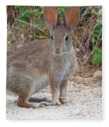 Cottontail Rabbit Surprised To Have Company Fleece Blanket
