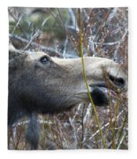 Cow Moose Dining On Willow Fleece Blanket