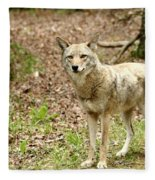 Coyote In Cades Cove Fleece Blanket