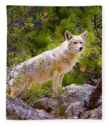 Coyote In The Rocky Mountain National Park Fleece Blanket