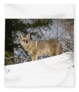 Coyote In Winter Fleece Blanket
