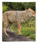 Coyote On A Log Closeup Fleece Blanket