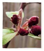 Crab-apple Tree Flower Buds Fleece Blanket
