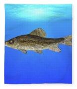 Creek Chubsucker Blue Lagoon  Fleece Blanket