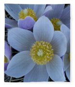 Crocus Blossoms Fleece Blanket
