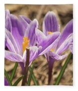 Crocuses 2 Fleece Blanket