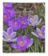Crocuses 5 Fleece Blanket
