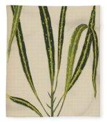 Croton Variegatum Angustifolium Fleece Blanket