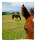 Curious Colt Fleece Blanket