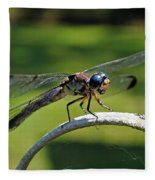 Curious Dragonfly Fleece Blanket