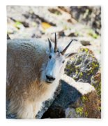 Curious Goat On The Mount Massive Summit Fleece Blanket
