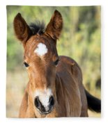 Curious Little Colt  Fleece Blanket