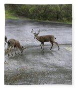 D-a0033 Mule Deer Fleece Blanket
