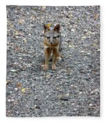 D-a0051-dc Gray Fox Pup Fleece Blanket