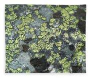 D07343-dc Lichen On Rock Fleece Blanket