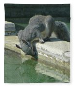 D2b6341-dc Gray Squirrel Drinking From The Pool Fleece Blanket