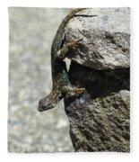 D7b6335 Western Fence Lizard, Male, Sonoma Mountain, Ca Fleece Blanket
