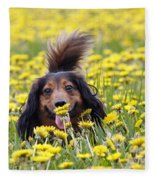 Dachshund On A Meadow In Bloom Fleece Blanket