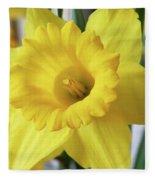 Daffodil Fleece Blanket