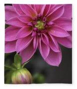 Dahlia With Dew In Pink Fleece Blanket